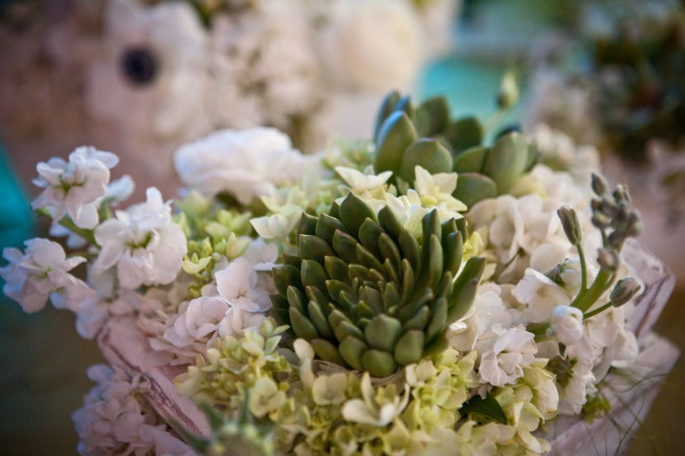 succulent centerpiece with white flowers