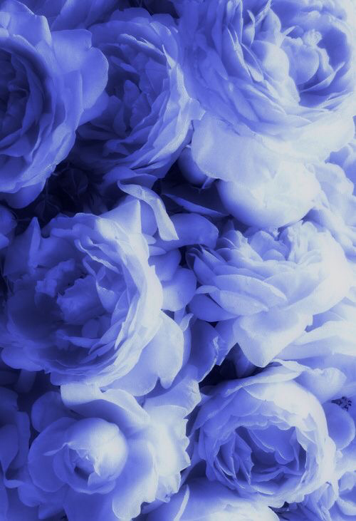 Pin By Megamind On Being A Photographer Yup That S Me Lavender Blue Periwinkle Color Blue Flowers