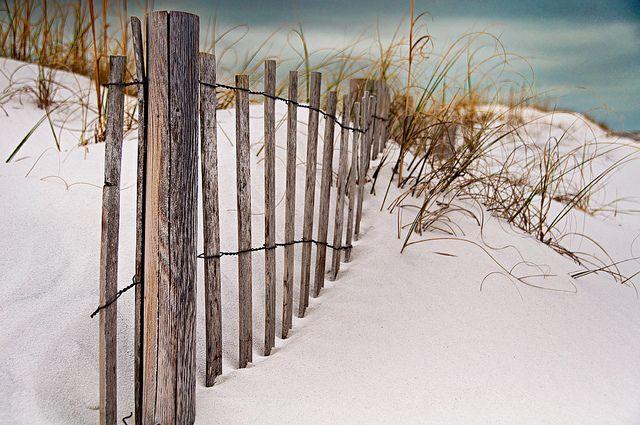 Happy Fence Friday: Sand Dune Beach Fence Redux by pixelmama, via Flickr