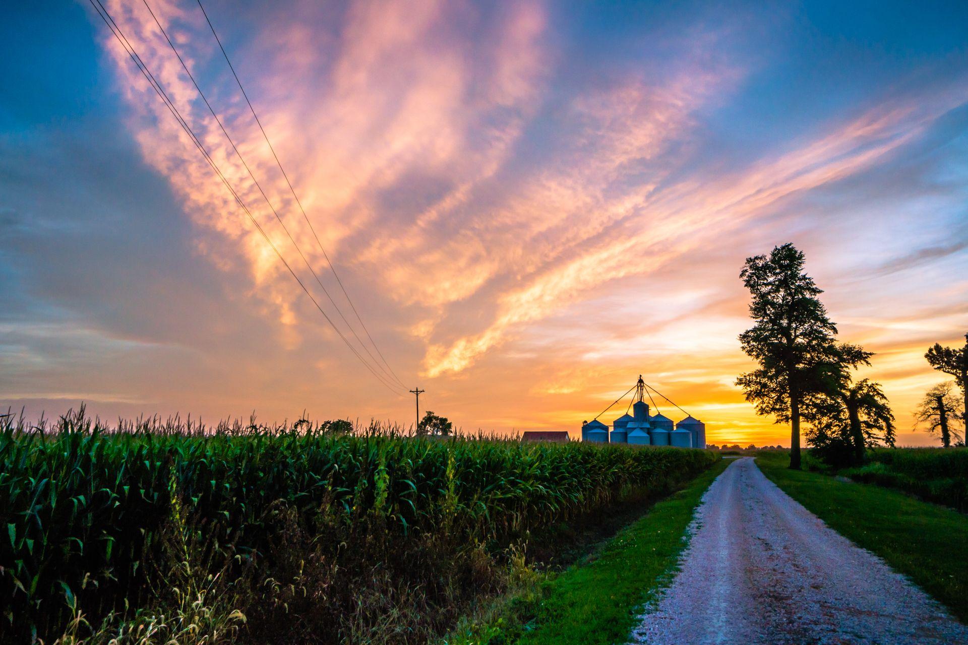 Kentucky Corn Field Owensboro Kentucky