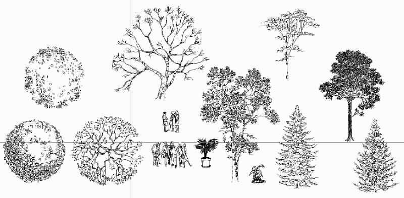 Pin by Kim Darmon on Vegetation | Revit trees, Fine art, Flowers