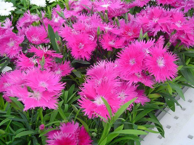 Algunas de las mejores plantas para atraer colibríes al jardín Flowers - plantas para jardin