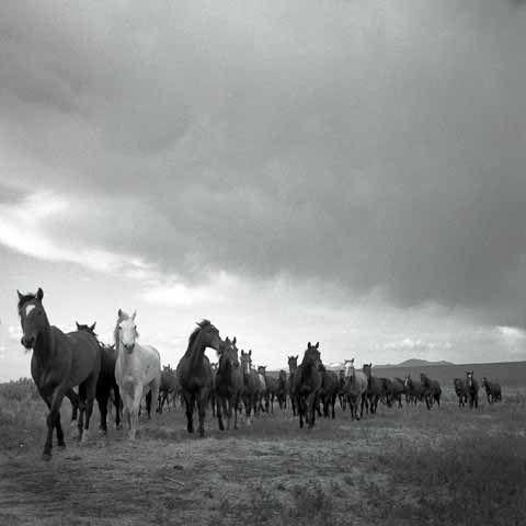 Remuda #9   by Adam Jahiel     (  IL Ranch, Nevada  )