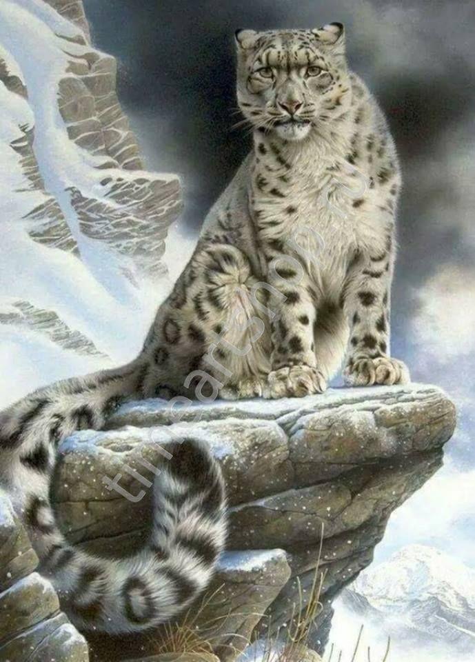 Снежный барс, картина раскраска по номерам, на холсте ...