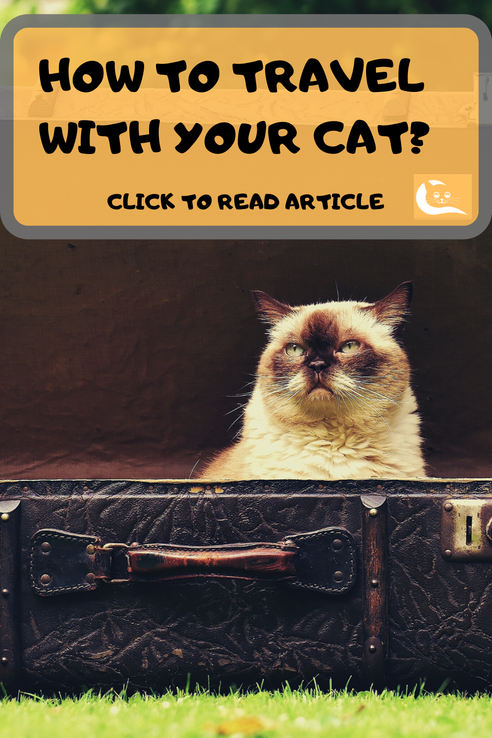 How To Travel With Your Cat Cats Pet Travel Cat Behavior