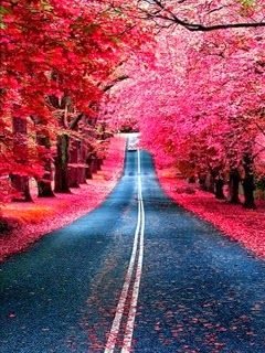 Pink Color Road 240x320 Nature Wallpaper Mobile Wallpapers Download Free Android Iphon Amazing Nature Photography Nature Beautiful Nature