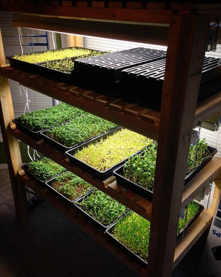 Growing Microgreens Podcast Diego Footer's Permaculture