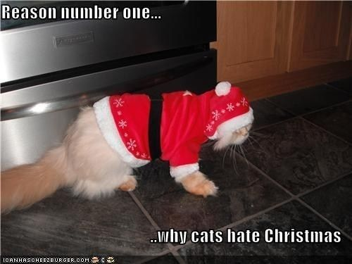 One reason why cats hate Christmas