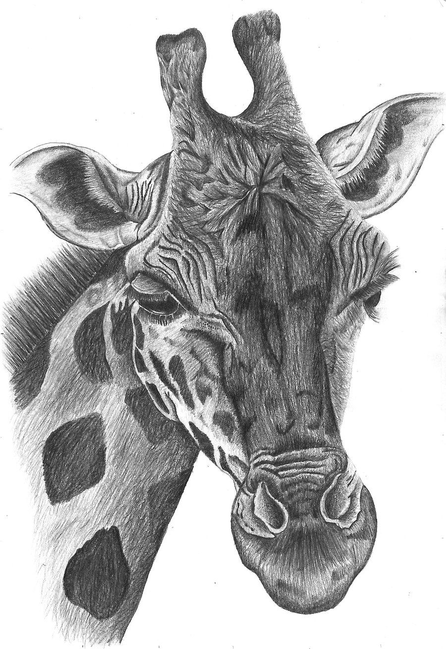 Animal Pencil Drawing Pic