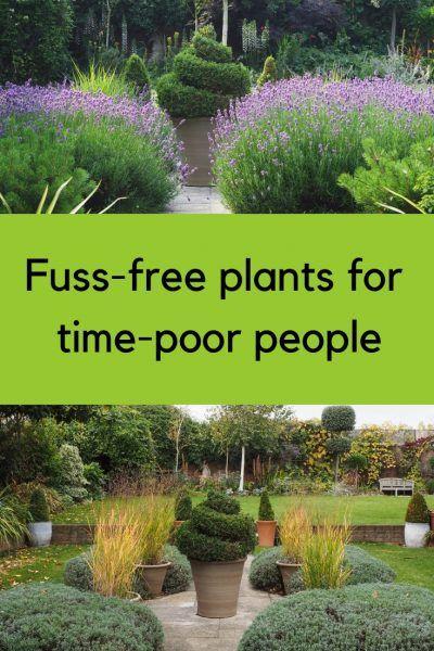 Brilliant low-maintenance plants for beautiful gardens -   12 small garden design Low Maintenance ideas
