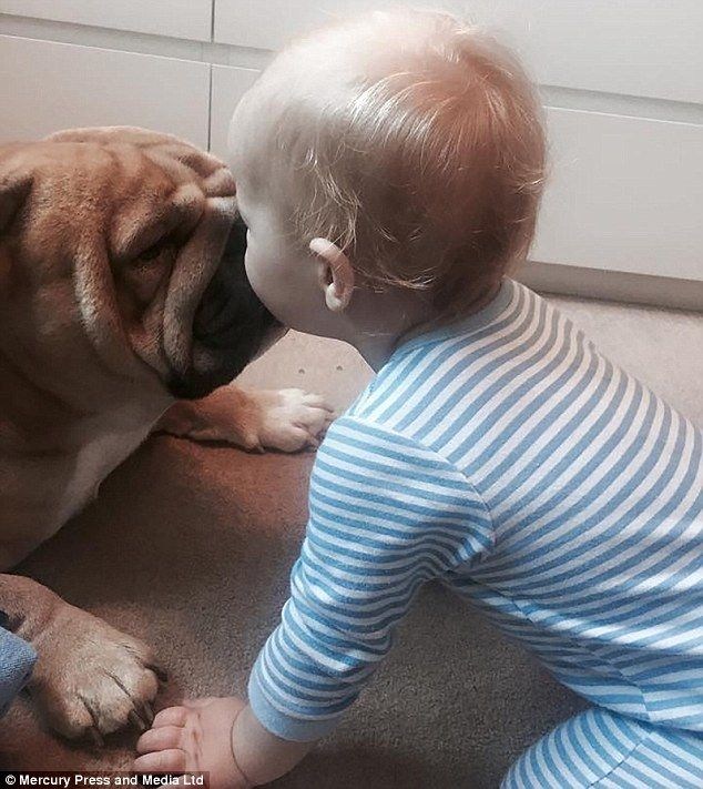 Friends Fur Ever Baby Boy Is Inseparable From His Pet Bulldog