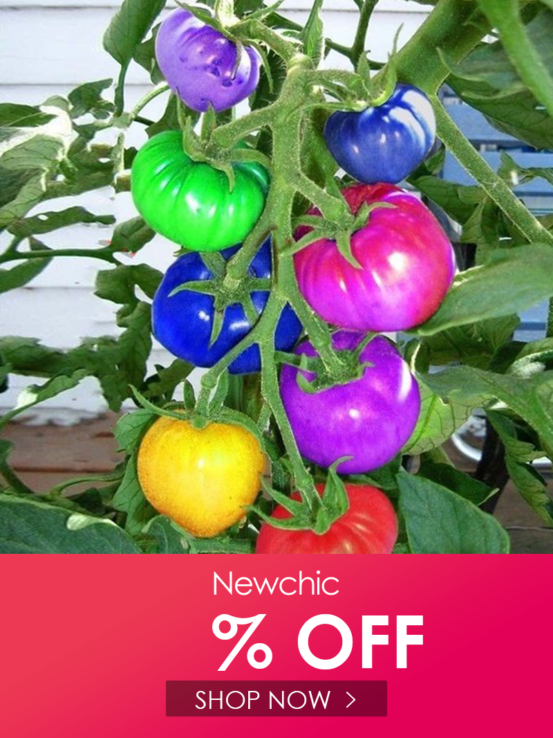 rainbow tomato seeds rare tomato seeds bonsai organic vegetable /& fruit seeds,potted plant for home /&garden 50 Seeds//pack