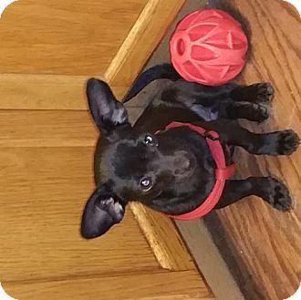 Tampa Fl Dachshund Mix Meet Mitzi Th A Dog For Adoption