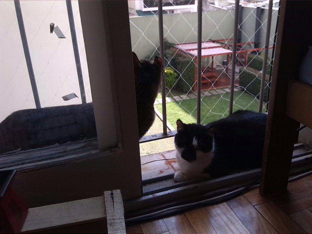 Balcón protegido para que los ahijados de @carolajota no caigan y puedan disfrutar tranquipanchis. ¿Los nombres? Tashi y Mate.