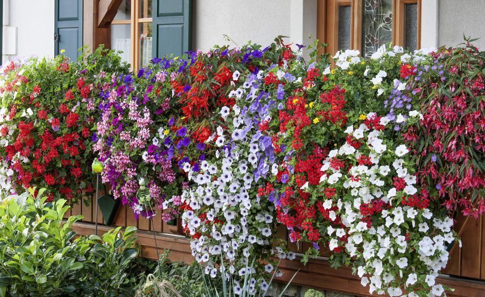 10 Tipps Fur Prachtige Balkonblumen Mit Bildern Balkon Blumen