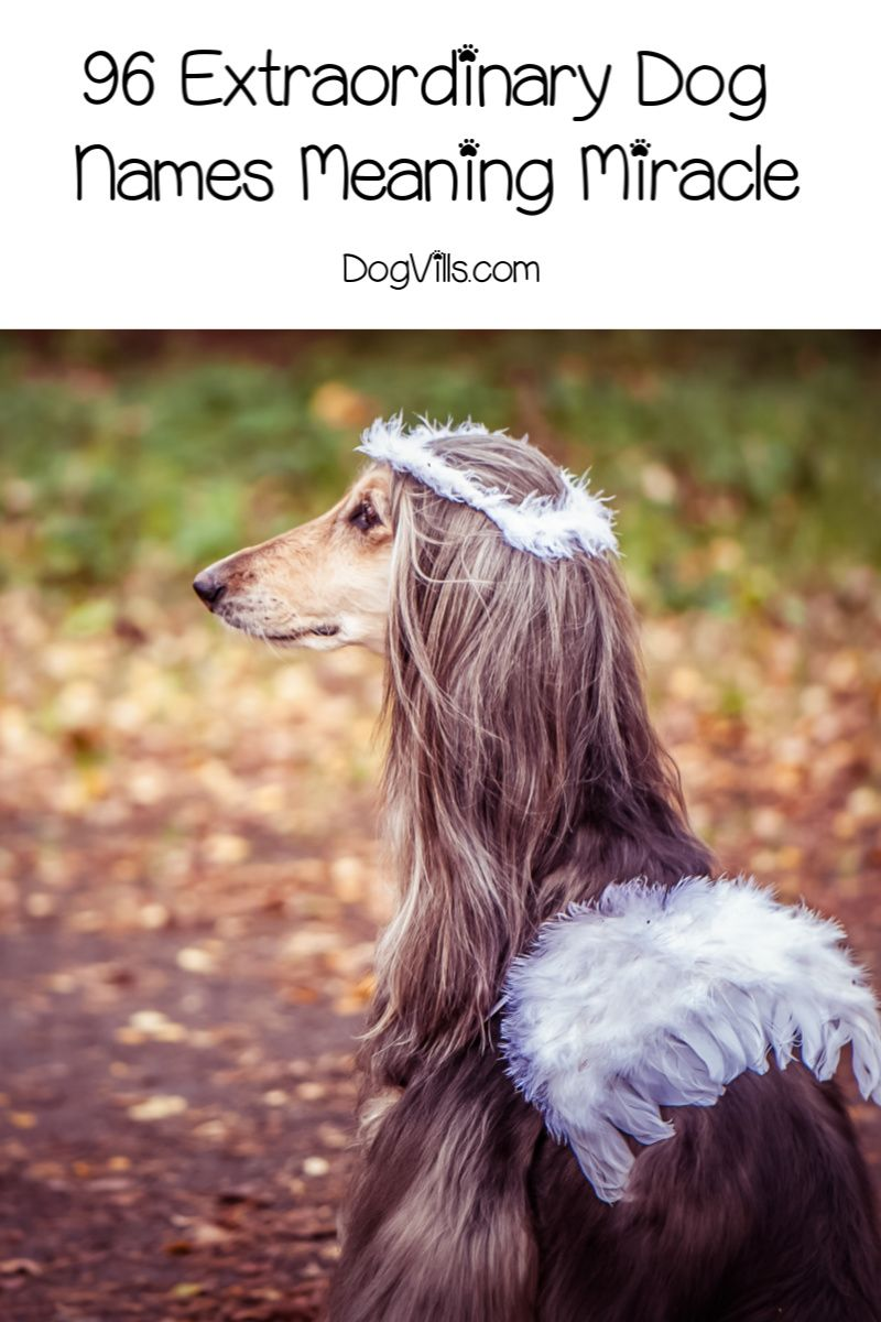 96 Extraordinary Dog Names Meaning Miracle Dog Names Beautiful Dog Names Girl Dog Names