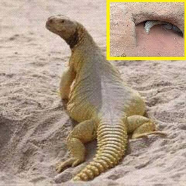 Pin By Hanem On Islam Animals Lizard Islam
