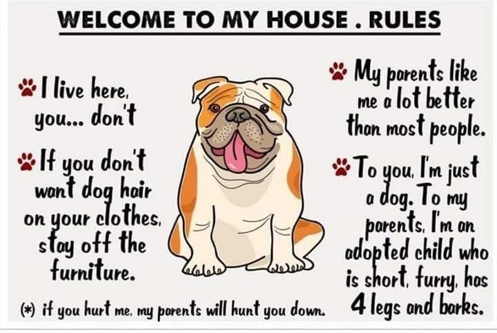 Pin By Ashley Barton On Dogs Bulldog Bulldog Funny Cute Bulldogs