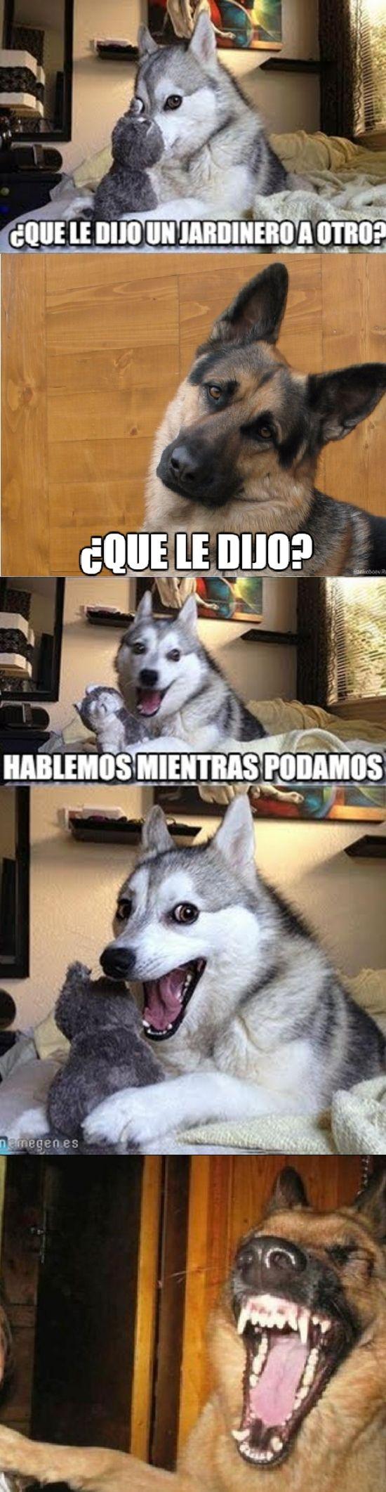 2484581 La Combinacion De Perros Mas Graciosa Que Existe Chistes De Perros Memes Divertidos Chistes Malos
