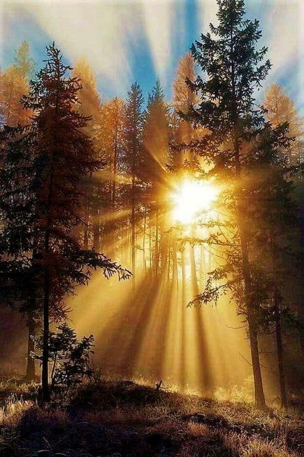Resultado de imagen de El Sil se cuela entre la espesura del Bosque