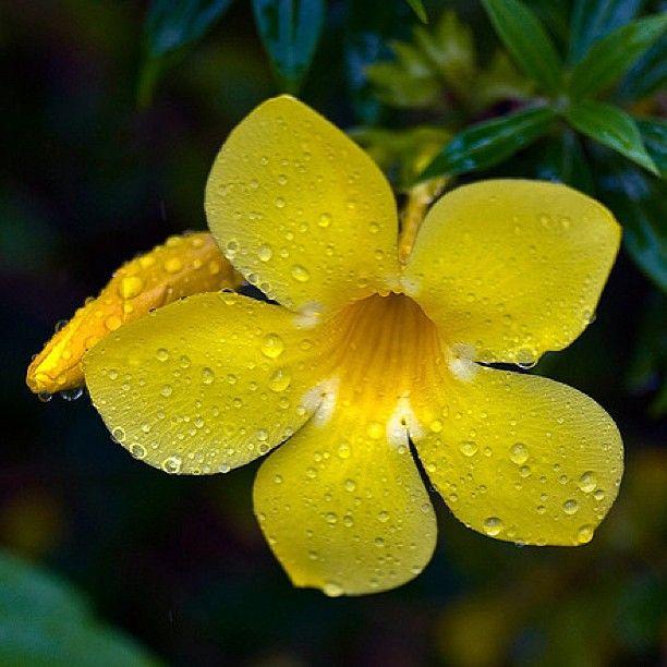 Essay on rainy season wikipedia