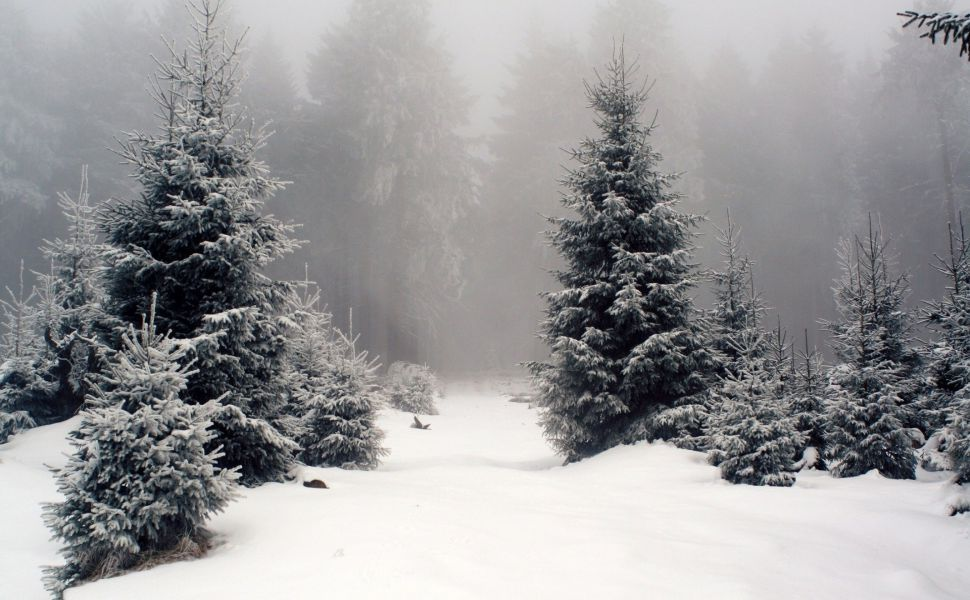 Pine Trees Covered With Snow Hd Wallpaper Winter Wallpaper Desktop Forest Wallpaper Winter Desktop Background Windows 10 wallpaper 1920x1080 winter