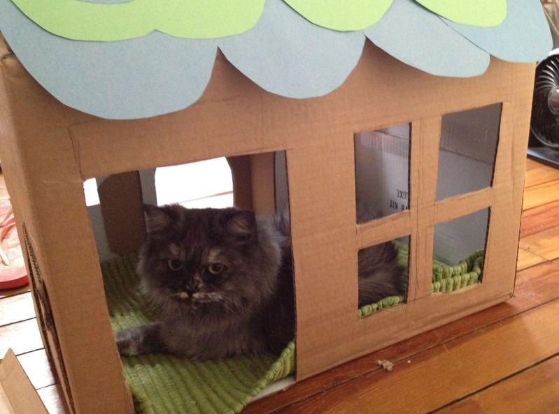 Cat house slightly more glamorous than a cardboard box