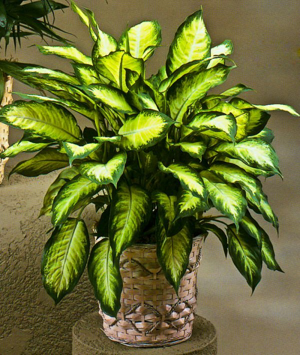 19 plantas de interior sin mantenimiento plantas de for Plantas decorativas de exterior