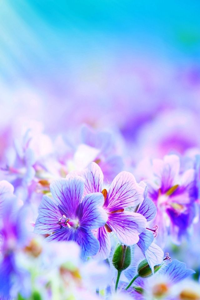 Beautiful Flowers Iphone Wallpaper Mobile9 Flower Iphone Wallpaper Beautiful Flowers Wallpapers Purple Flowers Wallpaper