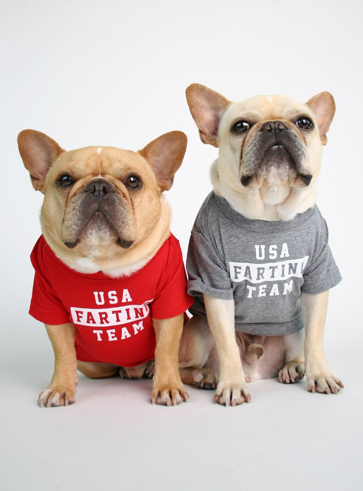 Usa Farting Team Dog Tee French Bulldog Dog Dogs Tee Dog Shirt