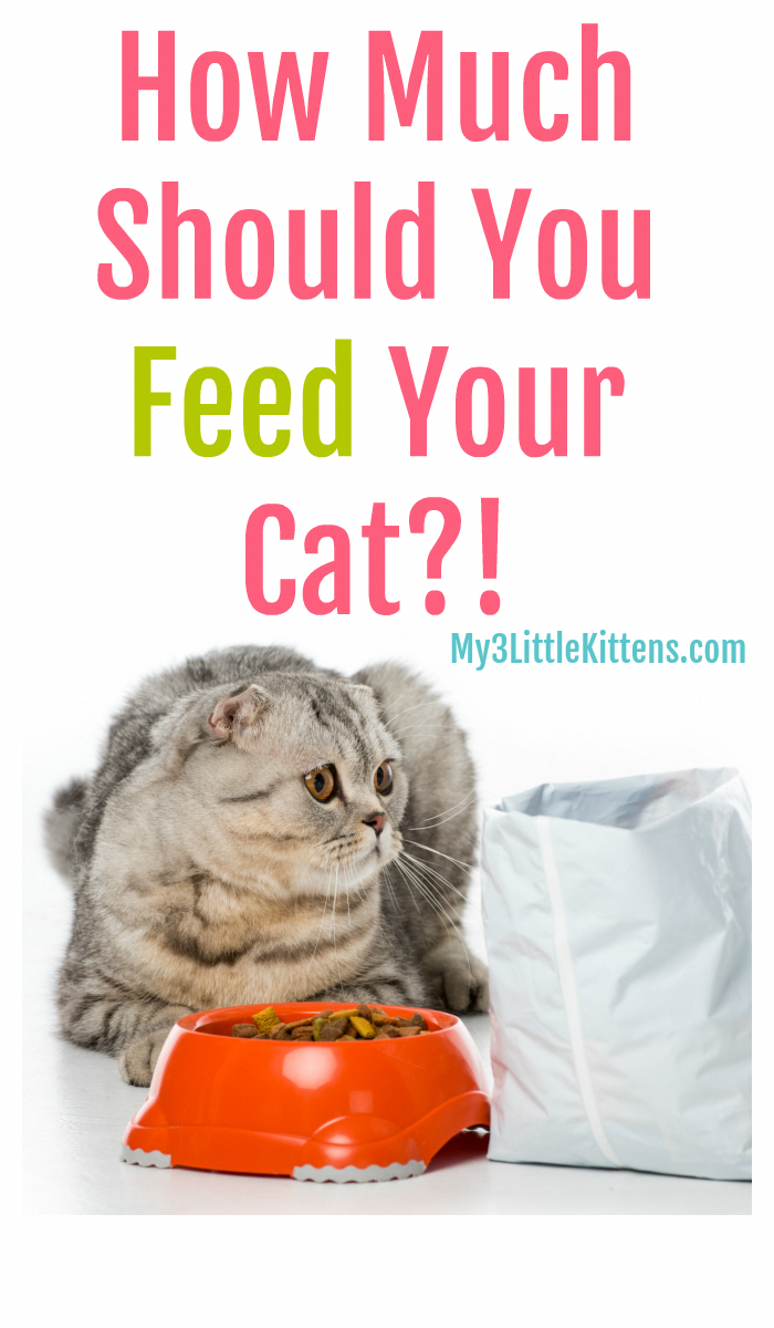 Ever Wonder How Much Should You Feed Your Cat From Wet To Dry Food We Have Kitty Tips Raising Kittens Cat Care Cat Training
