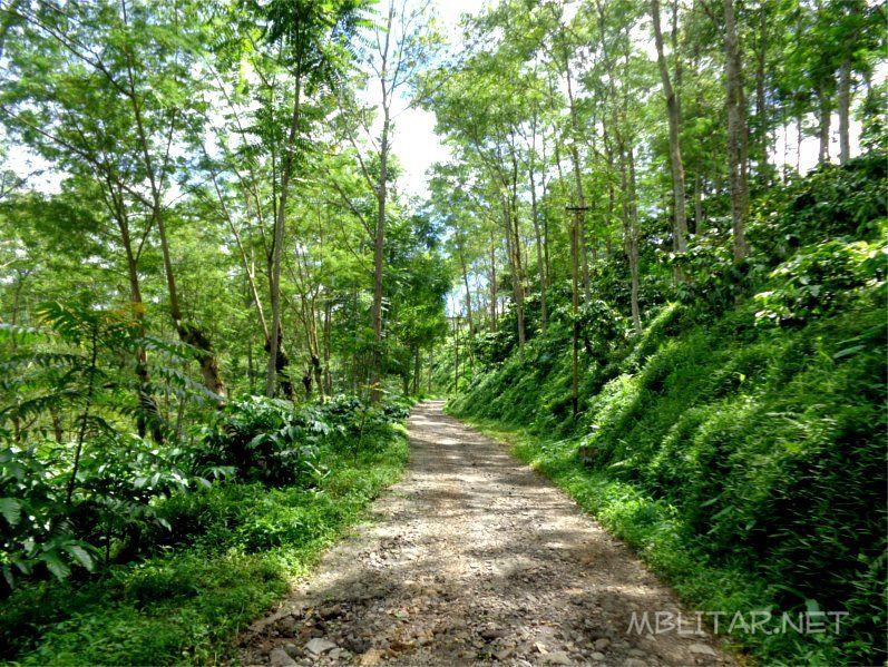 Wisata Alam Di Blitar Kebun Kawisari Sirah Kencong Hutan