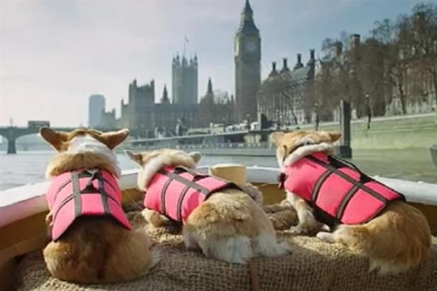 Three corgis tour London from the water