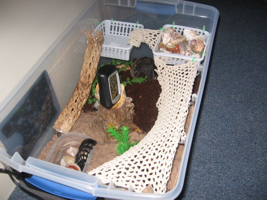 Diy Hermit Crab Habitat I Think I Might Get One