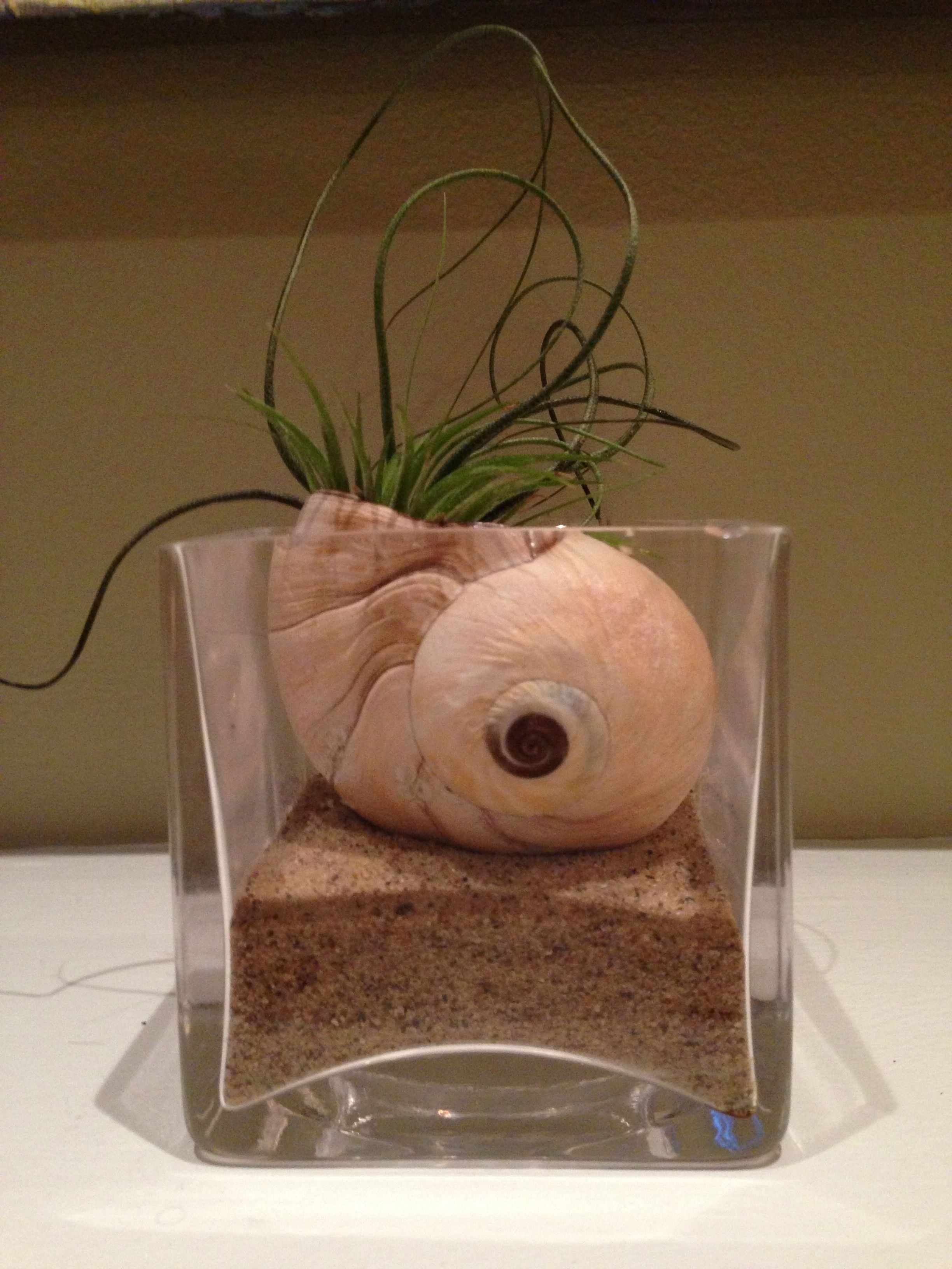 My own little seashell vignette! I put some sand in a $1 thrift shop ...