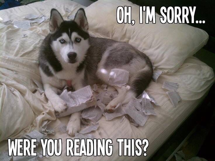Lol This Actually Happened At Our House With Our Siberian Huskies