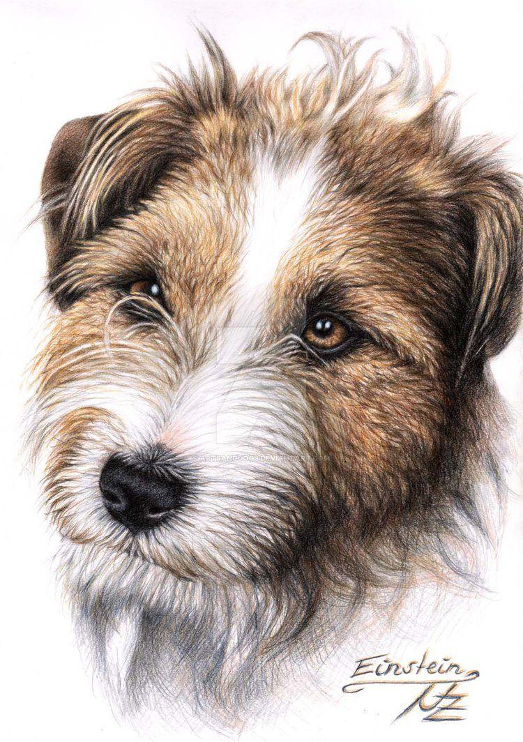 Jack Russell Terrier Einstein by ArtsandDogs on DeviantArt