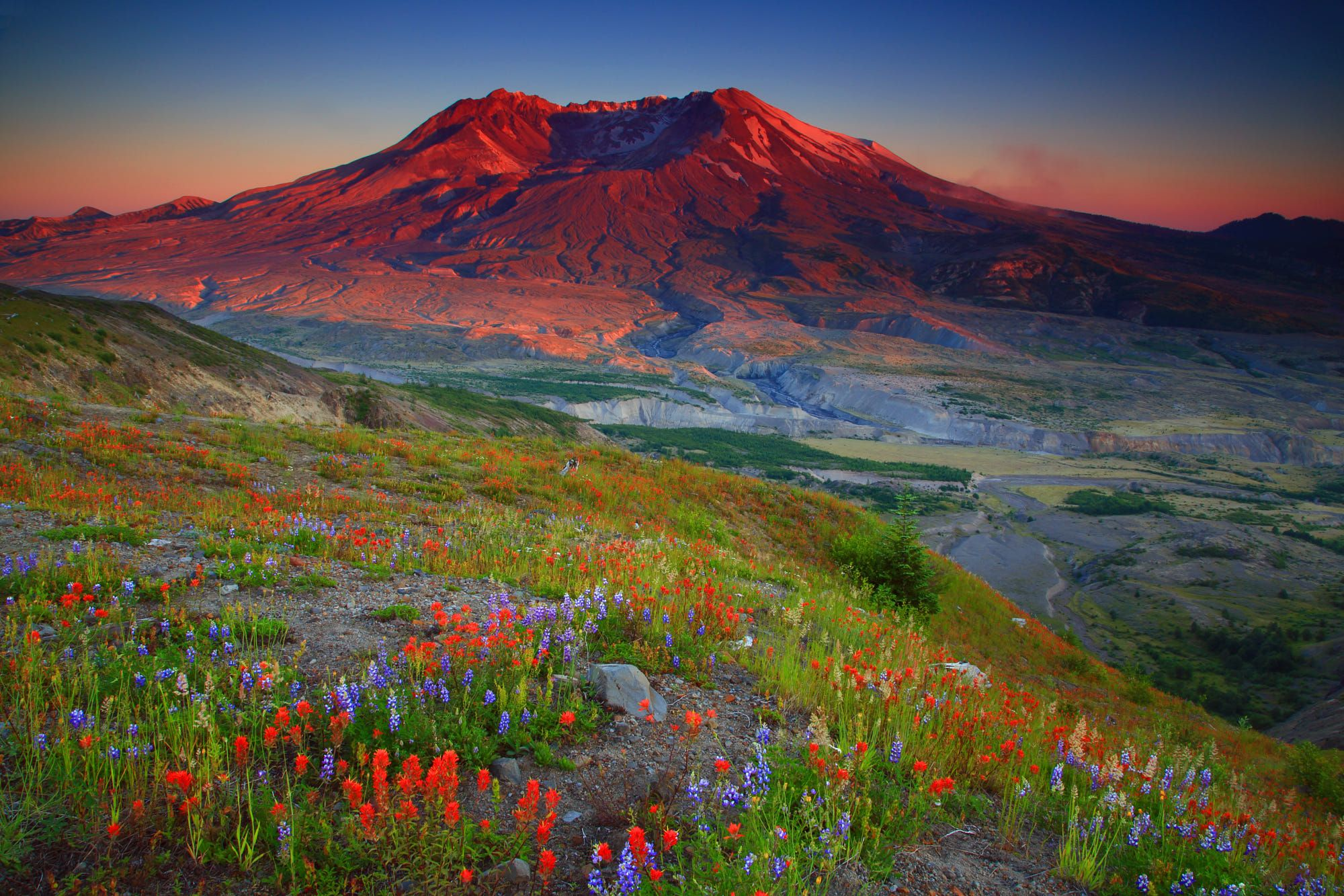 Sunset Wildflowers And Mt St Helens From The Boundary Trail In M By Randall J Hodges Zdjecie 77116139 500px Smukke Steder Steder
