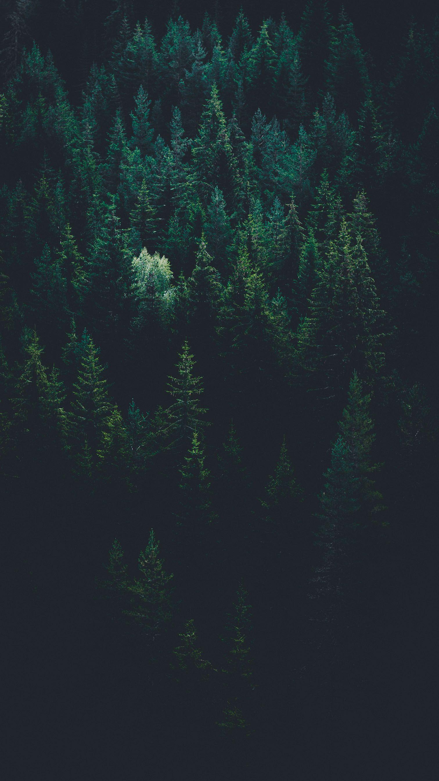 Best Dark or Black iPhone Wallpapers - Night iPhone Backgrounds [FREE Download] Best Dark or Black