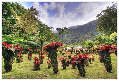 Le jardin botanique de balata martinique my country for Jardin balata