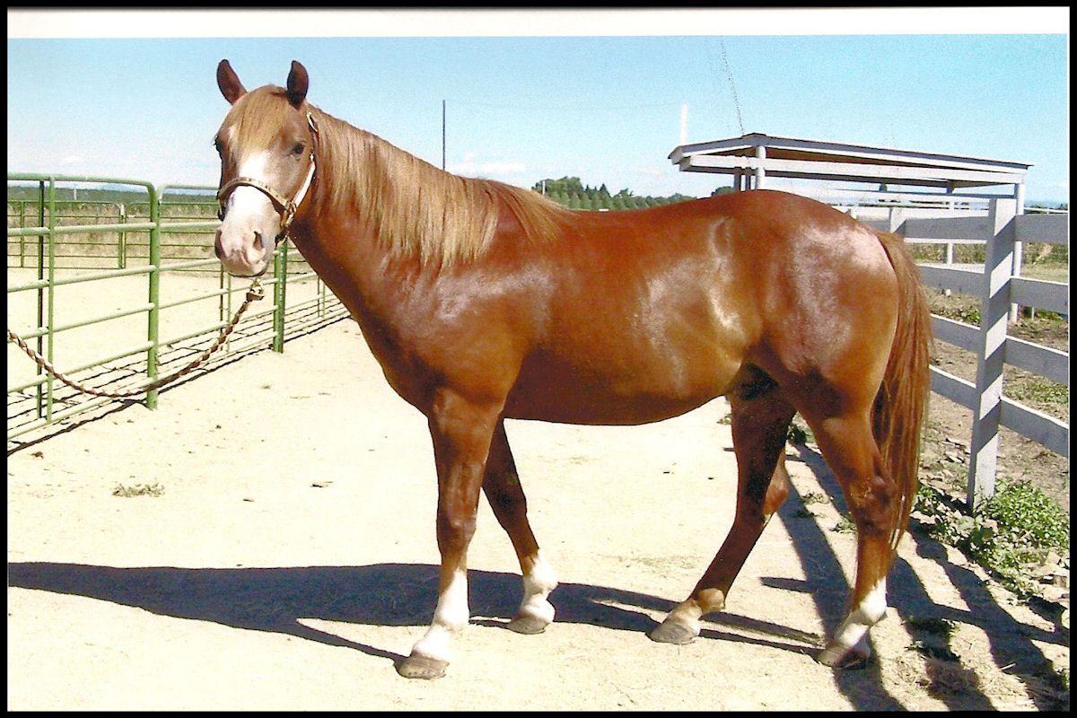 Pin by Kim Davis on horses Horses, Horse adoption, Animals