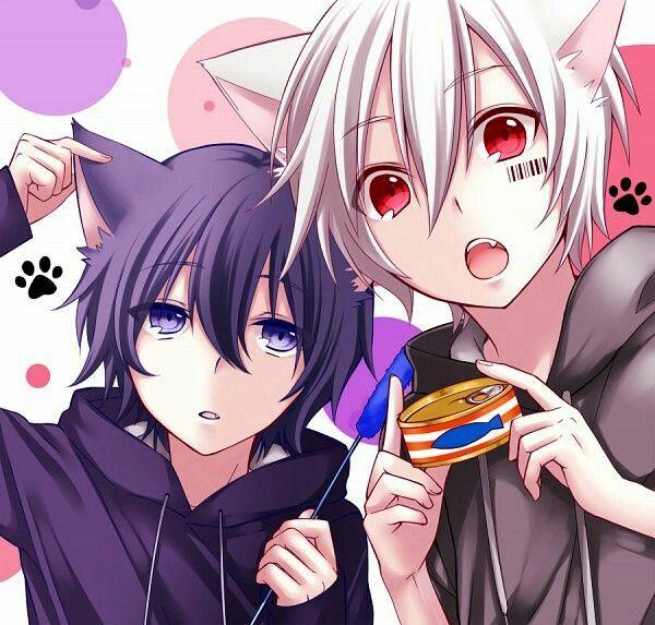 Team Moe Neko Girls Bunny Girls And Neko Boys Anime Anime Cat Boy Anime Neko
