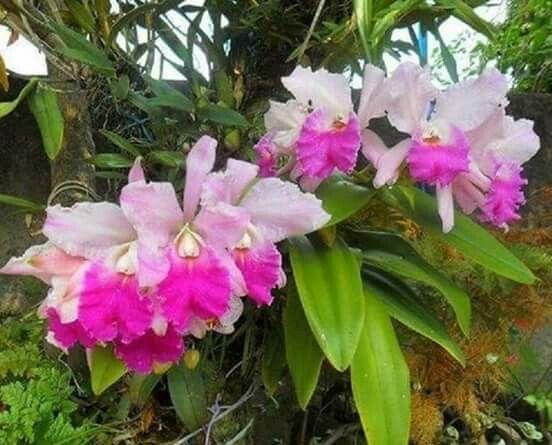 The Orchid, Orchids Garden, Garden Design, Google, Yard Design