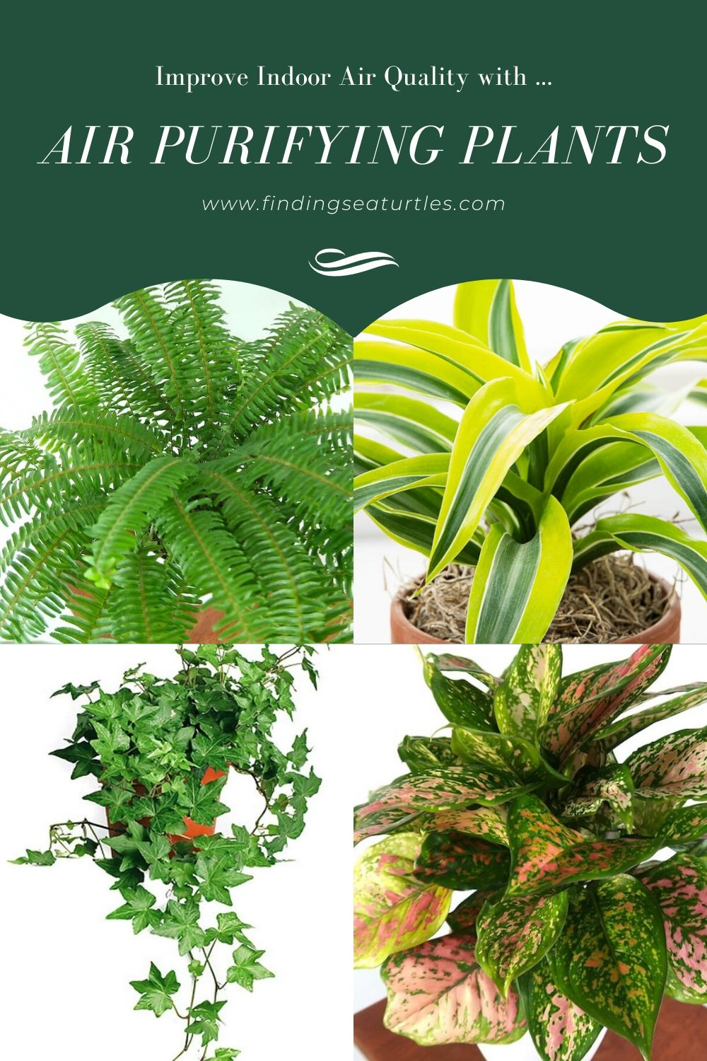 Air Purifying Plants for the Home Plants, Air cleaning