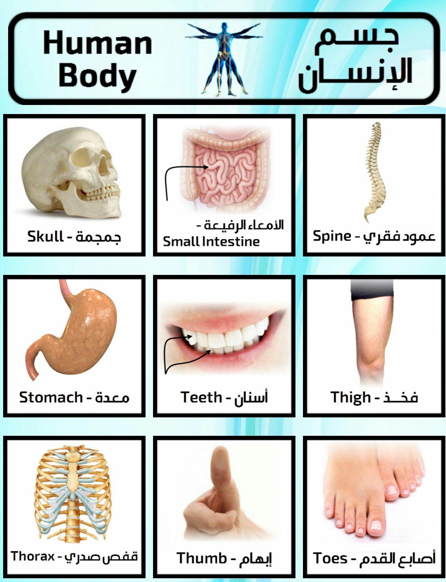 Learning Arabic Msa Fabiennem جسم الانسان English Language Learning Grammar Learning Arabic English Language Course