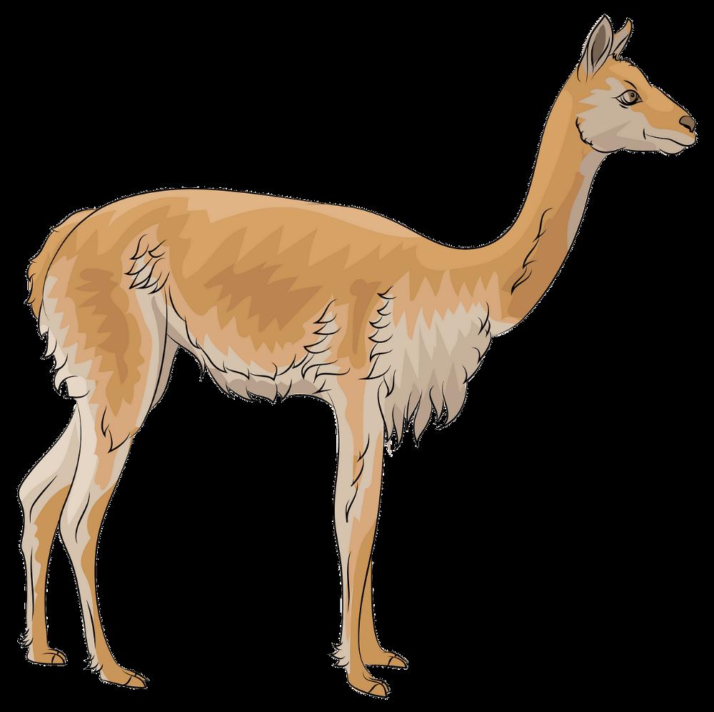 Vicuna Clipart Dibujos Animados Descargar Gratis Creazilla Vicuna Animal Dibujos Animados Vicuna Dibujo