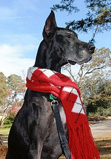 Cooper a super sweet Great Dane wishing you a Merry Christmas!