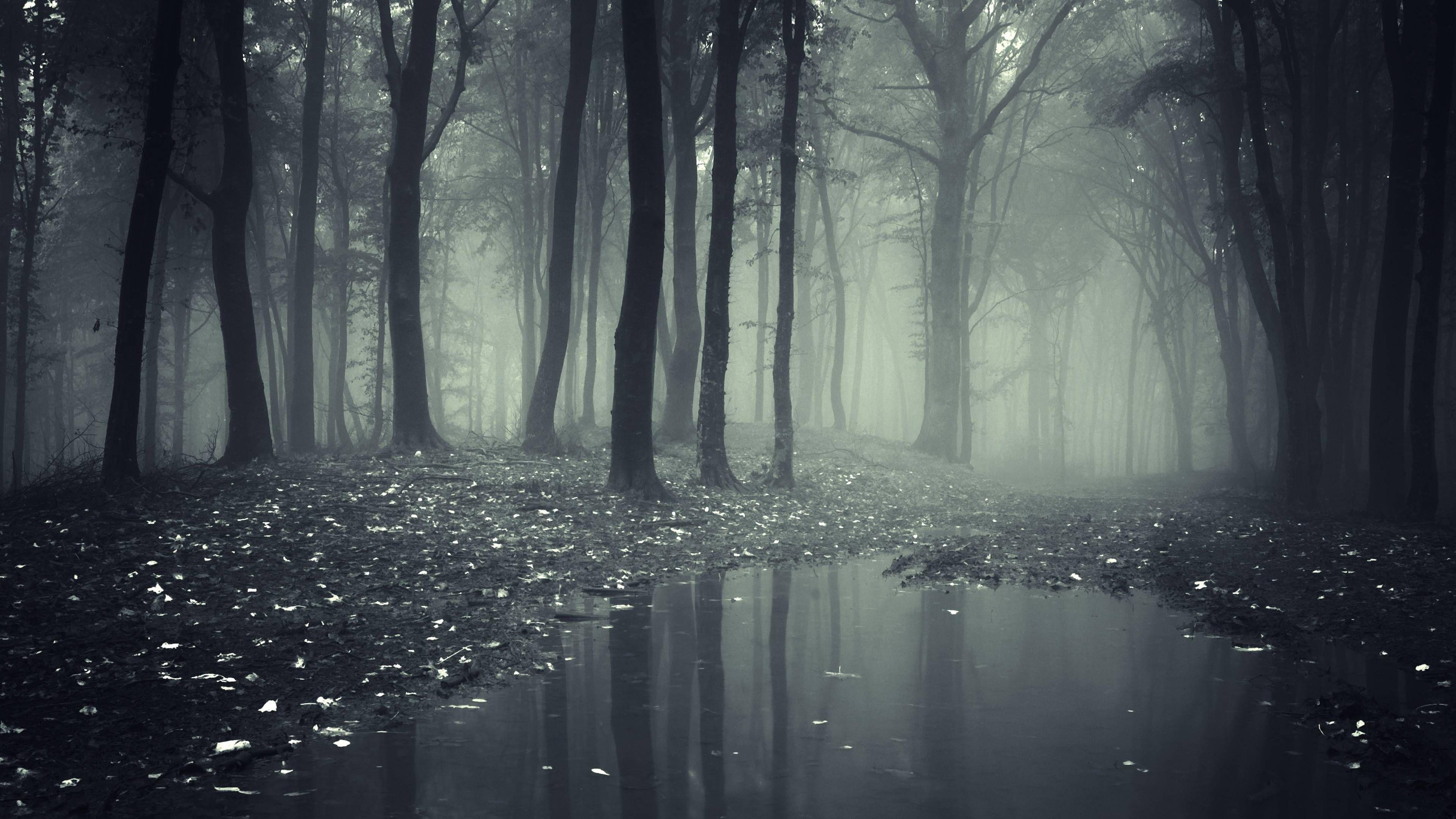 Not So Alone Shattered World Wattpad Forest Wallpaper Landscape Wallpaper Dark Wallpaper