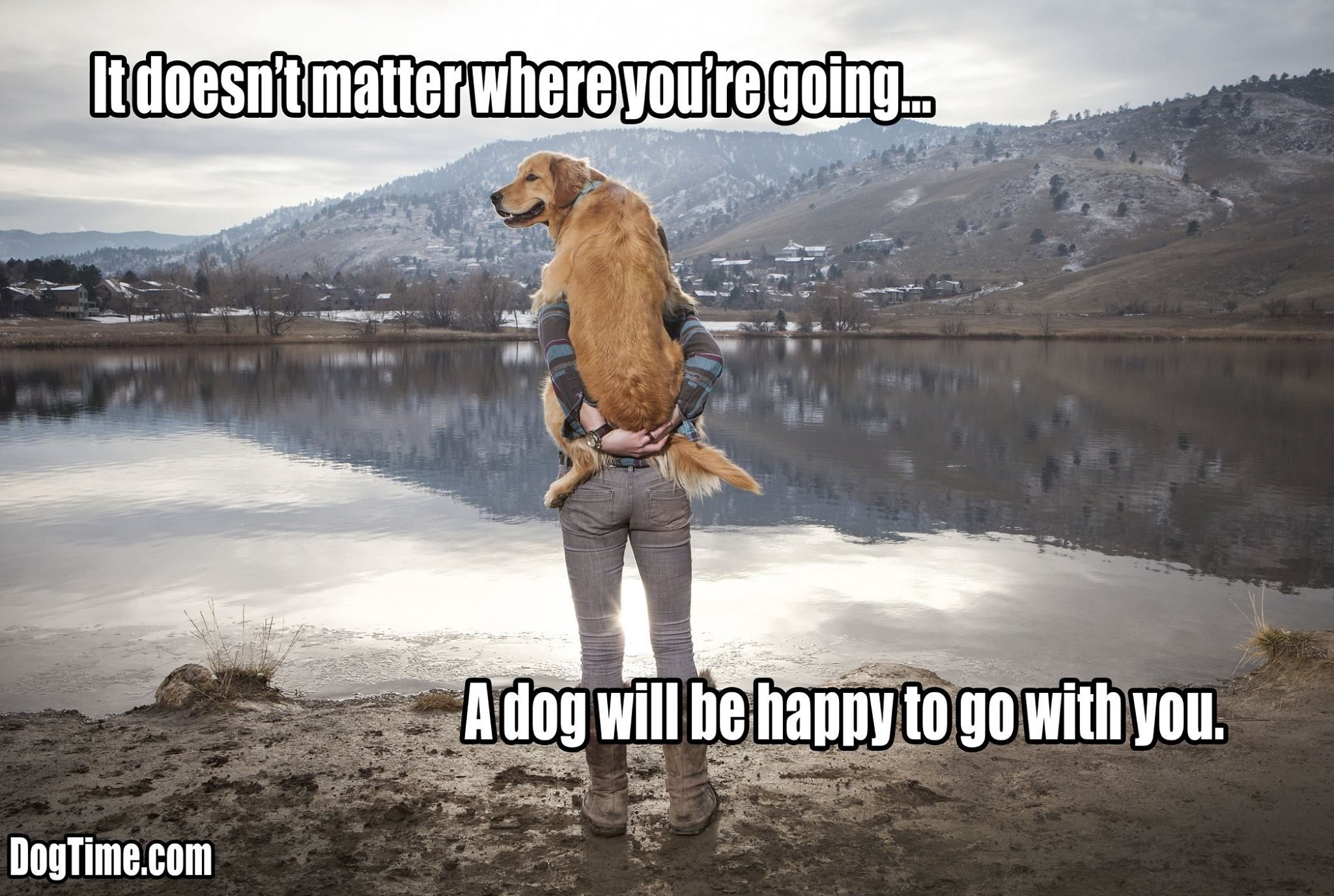 Dog Memes and Funny Humor Pictures vet