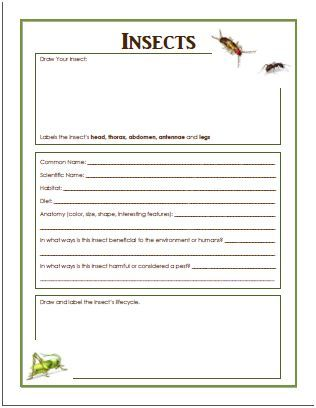 benefits of insects and free insect worksheet print science pinterest insects. Black Bedroom Furniture Sets. Home Design Ideas